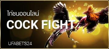 ไก่ชนออนไลน์ แทงไก่ชน Cock Fight UFABET